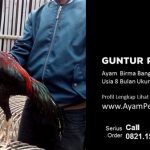 Ayam Birma Bangkok
