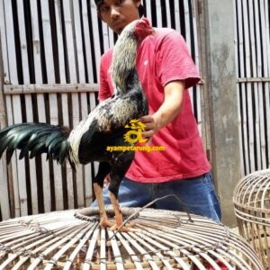 DANILO REVELLER Ayam Mathai